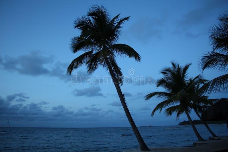 Palmträd i stranden royaltyfria foton