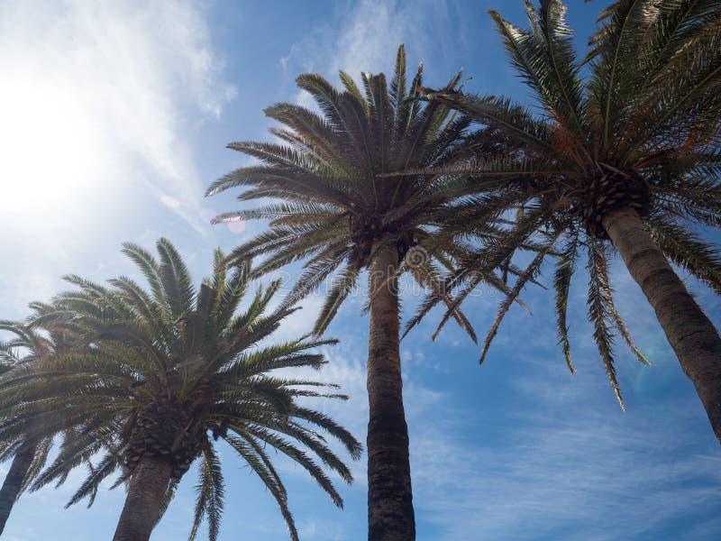 Palmträd längs kusten i Nerja på den härliga soliga dagen Bild av den tropiska semestern och solig lycka spain arkivfoto