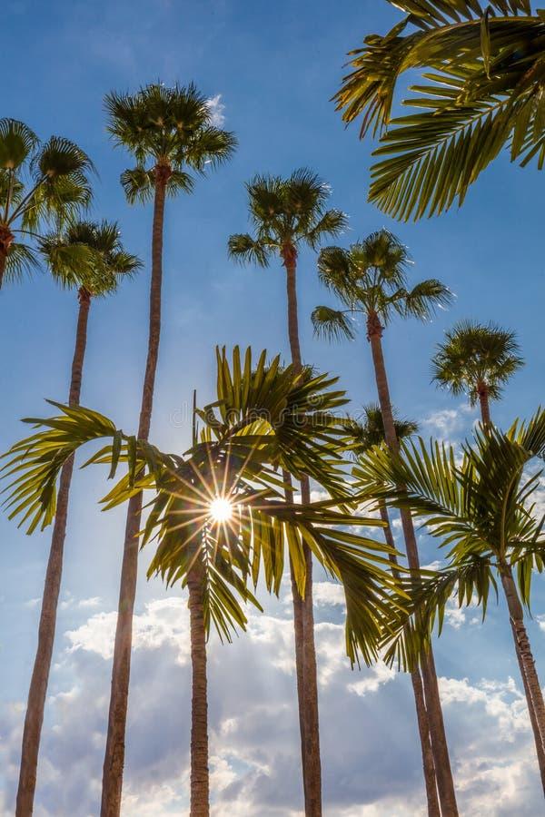 Palmträd längs Tampa Riverwalk i Tampa Florida arkivbilder