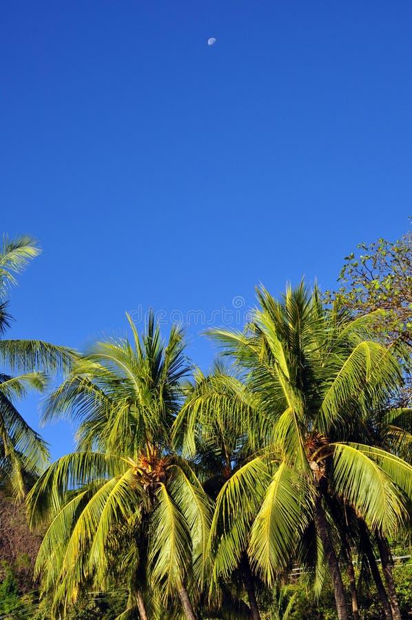Palmträd med blå himmel och månen royaltyfri foto