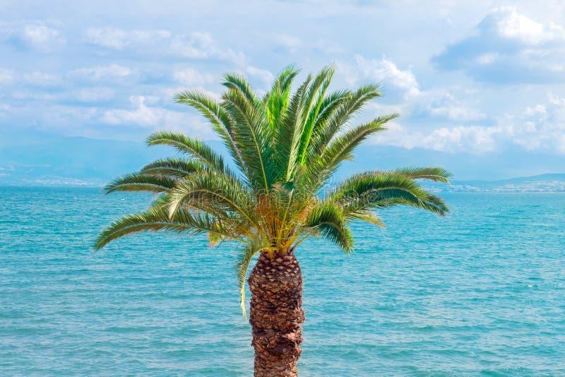 Palmträd med cloudscape och seascape på bakgrund f?r dublin f?r bilstadsbegrepp litet lopp ?versikt tropisk tree Soliga sommardag royaltyfri foto