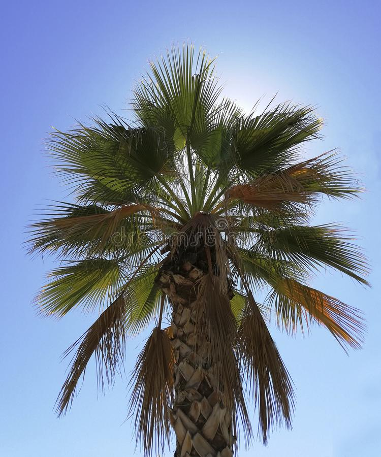 Palmträd med en solig bakgrund arkivbilder