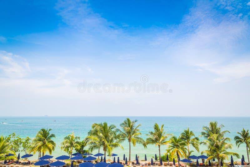Palmträd med härlig seascape arkivfoto