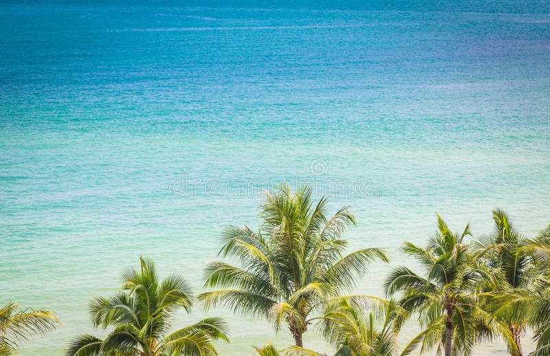 Palmträd med härlig seascape (den bearbetade filtrerade bilden) royaltyfria foton