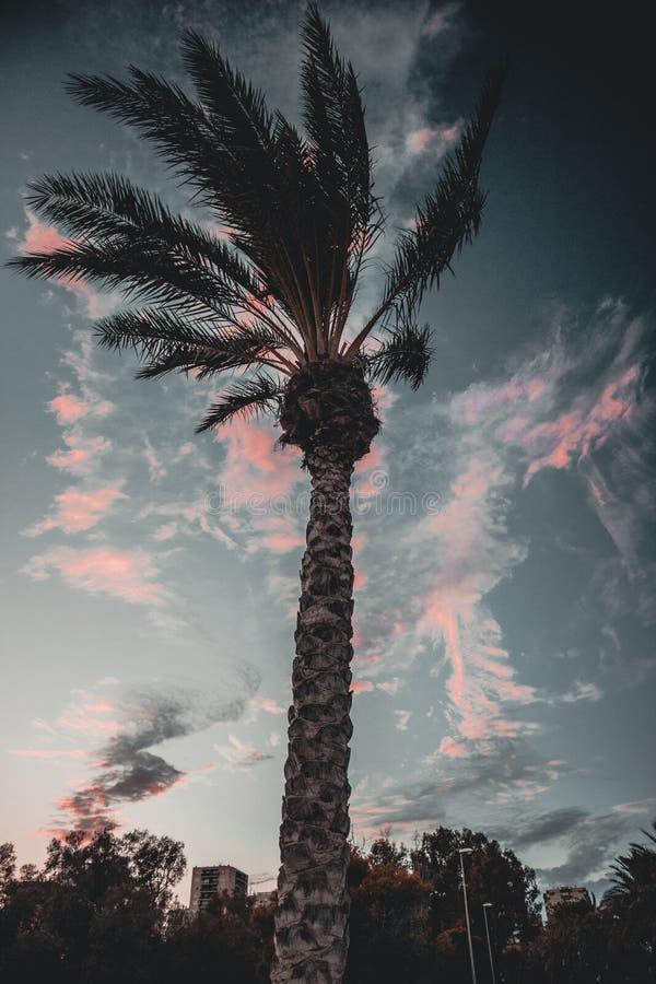 Palmträd med himlen bakom royaltyfria bilder