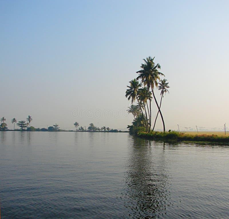 Palmträd med krökta stammar längs avkrokkanalen, Kerala, Indien royaltyfri bild