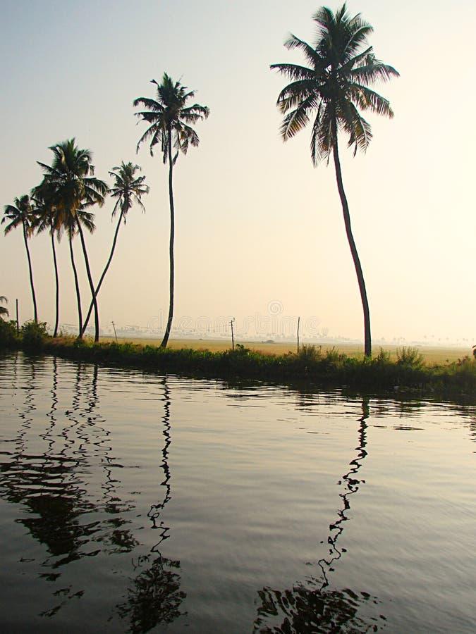 Palmträd med krökta stammar längs avkrokkanalen och risfält, Kerala, Indien royaltyfria foton