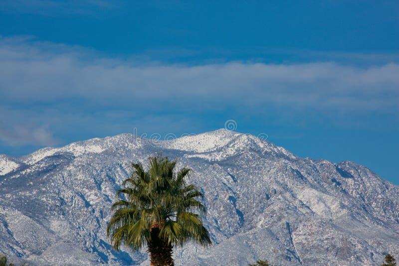 Palmträd med snötäckta berg arkivfoto