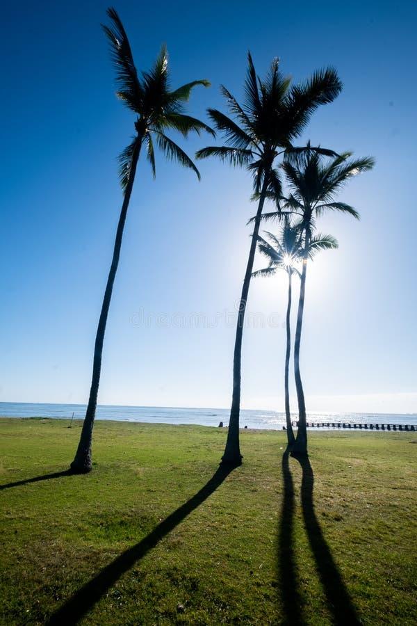 Palmträd med solen som silhouetting dem royaltyfria foton