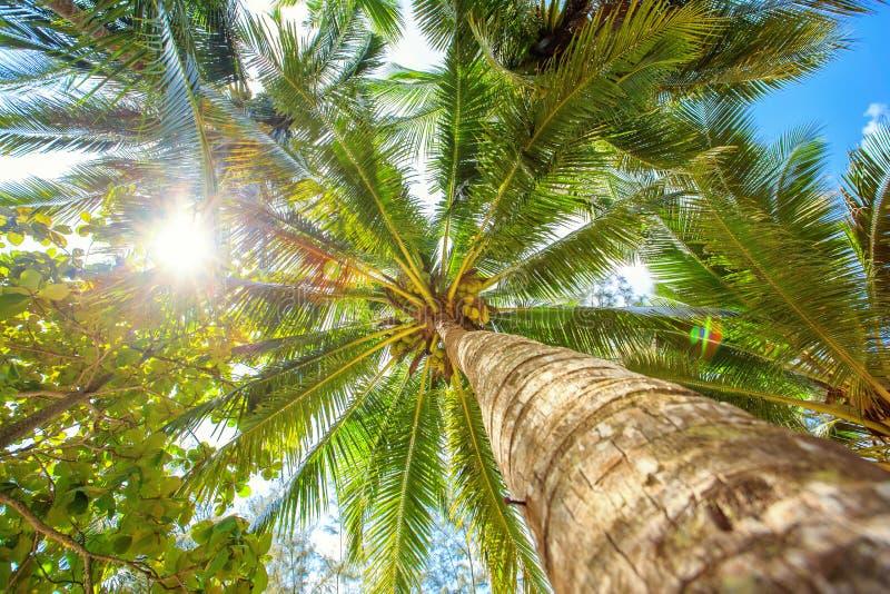 Palmträd med solig dag thailand Koh Samui ö fotografering för bildbyråer