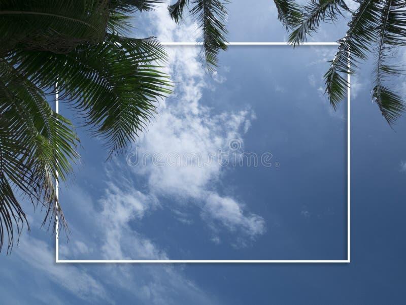Palmträd mot blå himmel med den tomma vita ramen, kopieringsutrymme royaltyfri fotografi