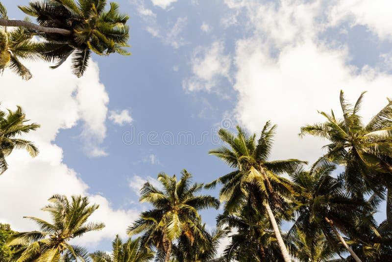 Palmträd mot blå himmel, palmträd på den tropiska kusten royaltyfria bilder
