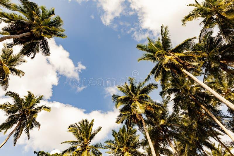 Palmträd mot blå himmel, palmträd på den tropiska kusten arkivfoton