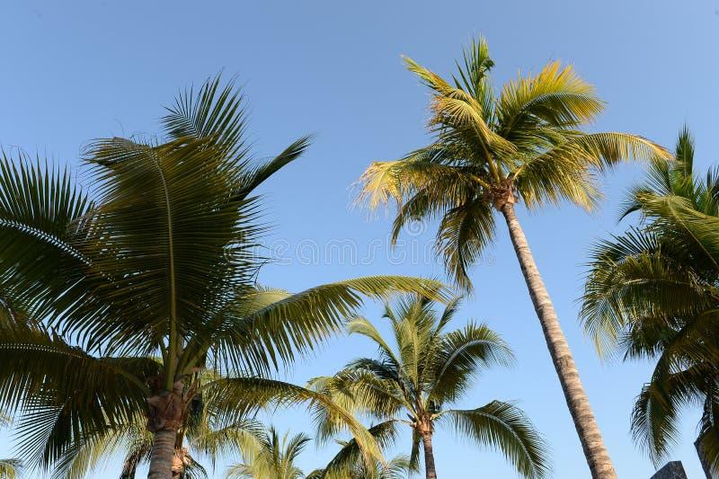Palmträd mot blåa himlar royaltyfri foto