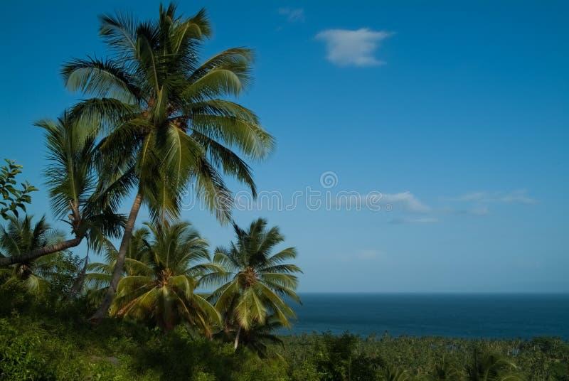 Palmträd mot den blåa himlen och havet arkivfoto