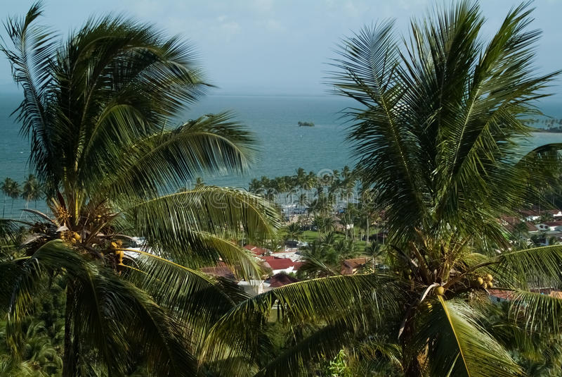 Palmträd mot den blåa himlen och havet arkivbild