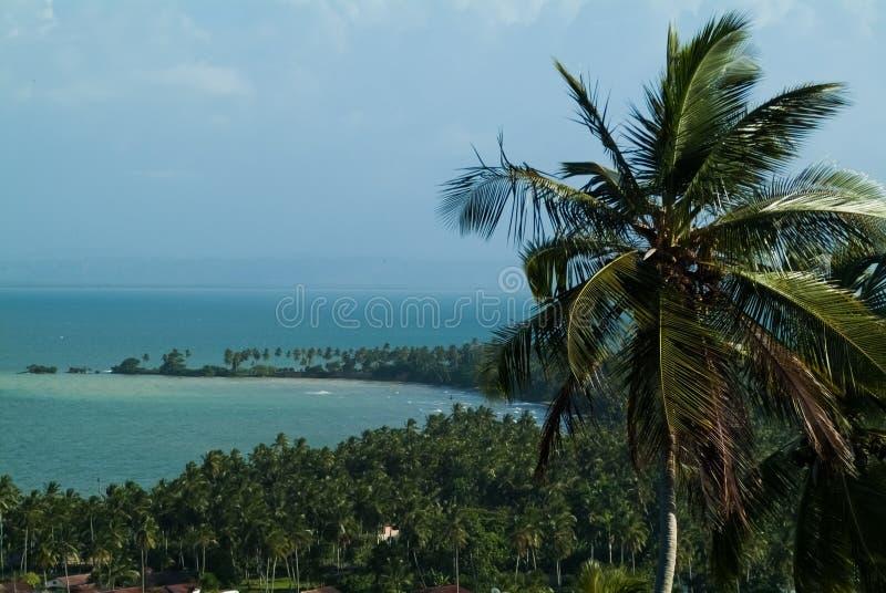 Palmträd mot den blåa himlen och havet royaltyfria bilder
