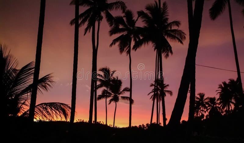 Palmträd mot himlen som är upplyst vid solnedgången royaltyfri bild