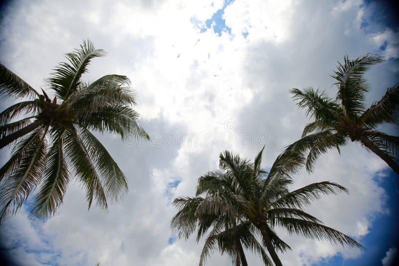 Palmträd mot moln arkivbilder