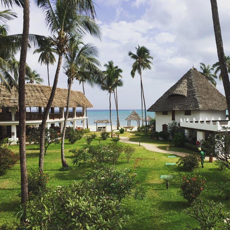 Palmträd nära havet royaltyfri fotografi