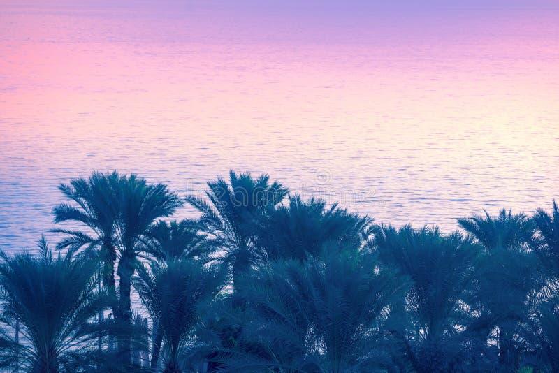 Palmträd nära havet av Galilee arkivfoto