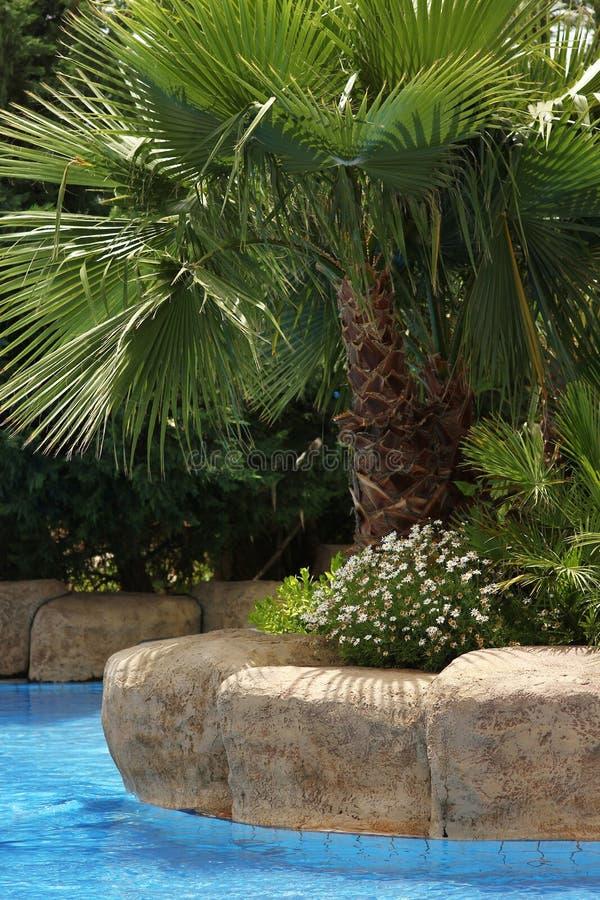 Palmträd nära vattenpöl i havssemesterorten sätter på land royaltyfri fotografi