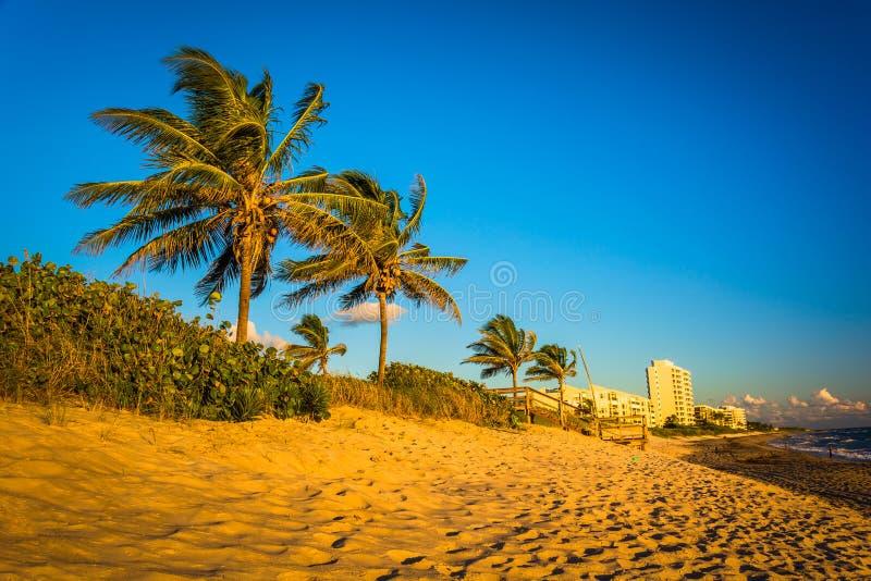 Palmträd och andelslägenheter på stranden av Jupiter Island, Flor royaltyfria foton