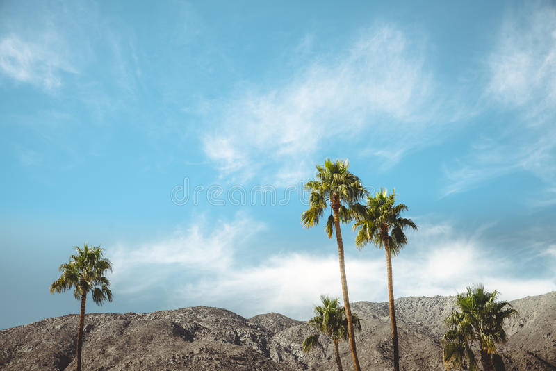 Palmträd och berg för koloni för Palm Springstappningfilm royaltyfri foto
