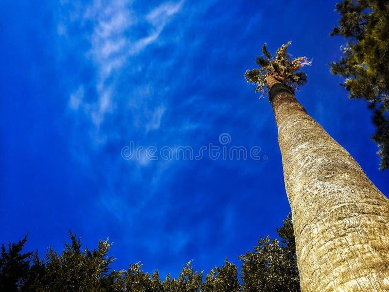 Palmträd och blå himmel, palmträd på den tropiska kusten, tappning som tonas och stiliseras, kokospalm, klara sommarhimlar royaltyfria bilder