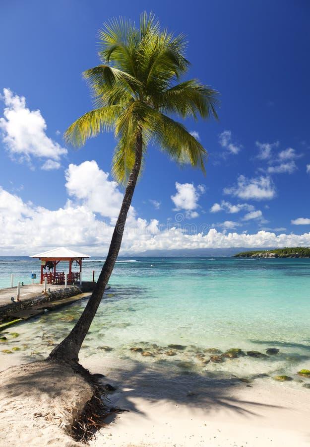 Palmträd och brygga på den tropiska stranden royaltyfri fotografi