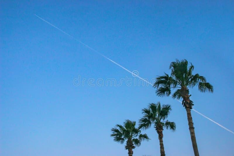 Palmträd och Contrails royaltyfria bilder