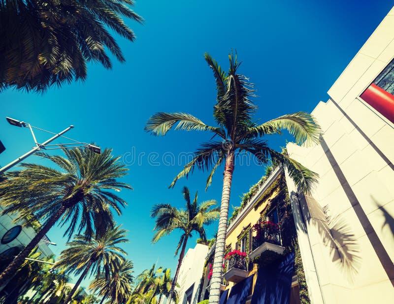 Palmträd och eleganta byggnader i rodeodrev arkivbild