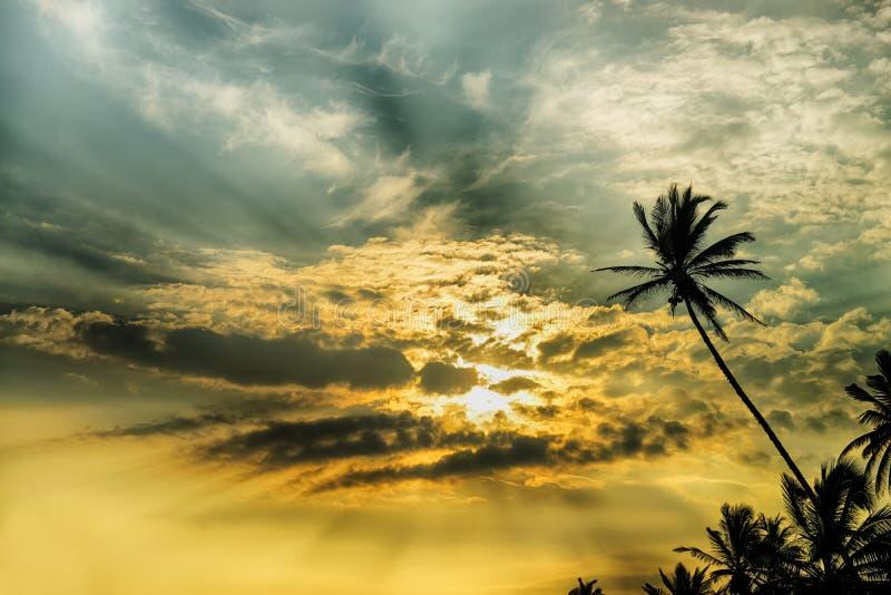 Palmträd och fantastisk solnedgång arkivfoto