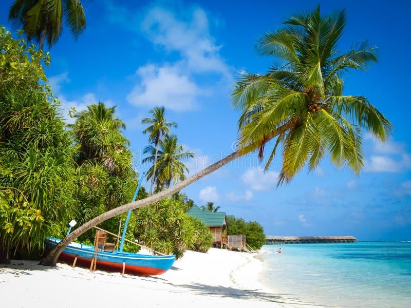 Palmträd och fartyg i Maldiverna royaltyfri bild