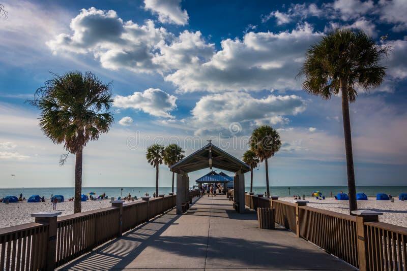 Palmträd och fiskepir i Clearwater sätter på land, Florida royaltyfri foto