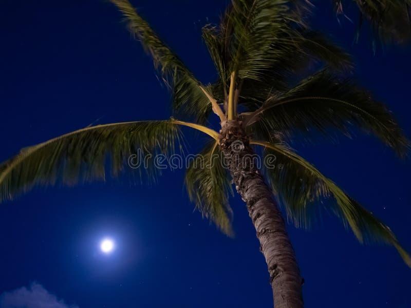 Palmträd och fullmåne på natten med mörkt - blå himmel royaltyfri foto