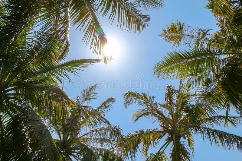 Palmträd och glänsande sol över ljus himmelbakgrund fotografering för bildbyråer