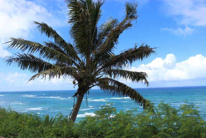 Palmträd- och havsikt Hawaii arkivbild