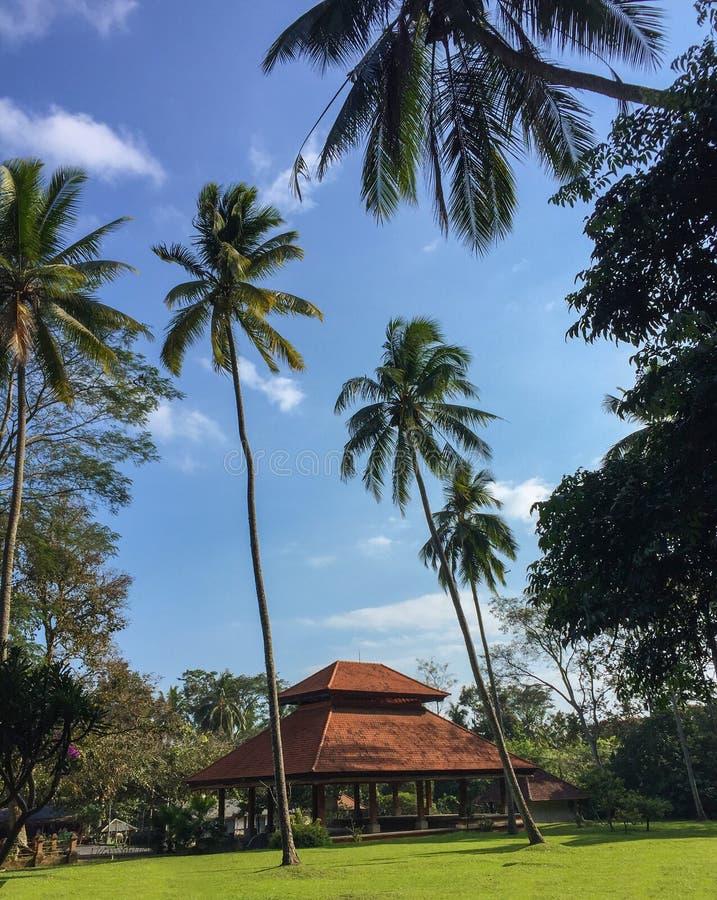 Palmträd och hus i Balinesestil Exotiskt landskap från den Bali ön royaltyfria bilder