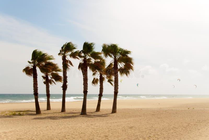 Palmträd och kitesurfers i vinden arkivfoto