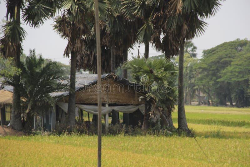 Palmträd och kojor i den Sundarbans nationalparken som är berömd för den kungliga Bengal tigern royaltyfria foton