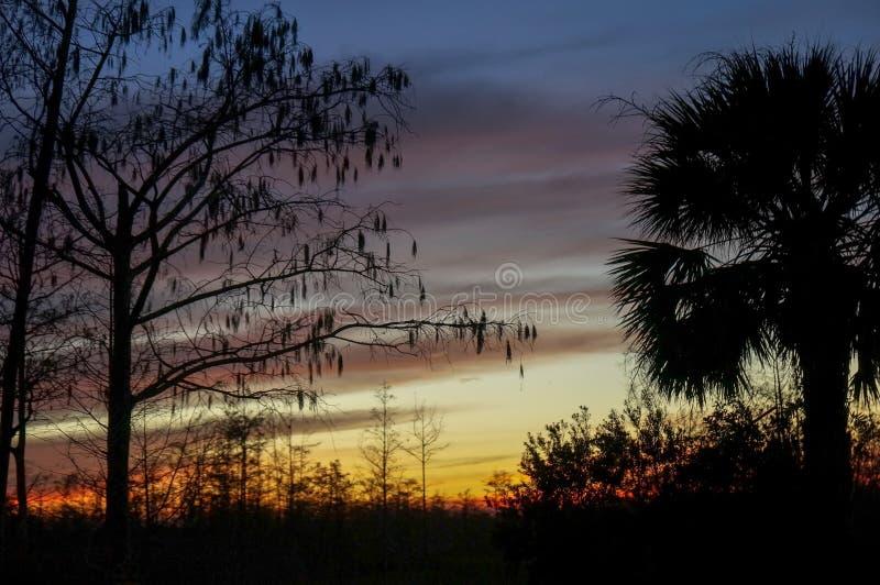 palmträd och kraftledningar på solnedgången royaltyfri foto