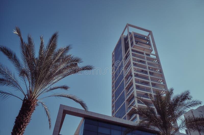 Palmträd och moderna byggnader i Tel Aviv, ISRAEL fotografering för bildbyråer