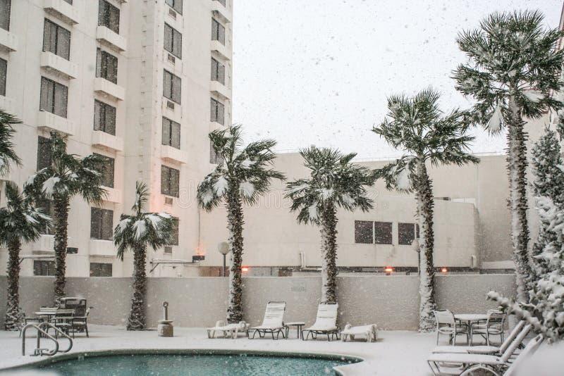 Palmträd och pöl i snö arkivbilder