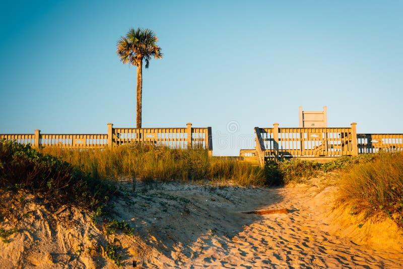 Palmträd- och sanddyn gömma i handflatan in kusten, Florida royaltyfri bild