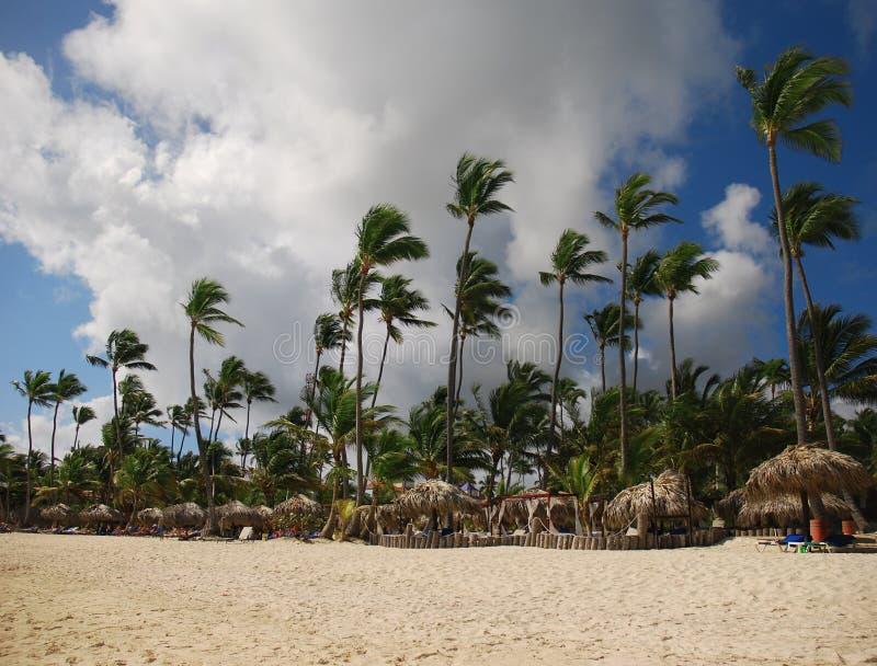 Palmträd och sandig strand, Dominikanska republiken royaltyfria foton