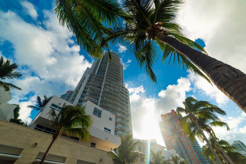 Palmträd och skyskrapor i Miami Beach på solnedgången fotografering för bildbyråer