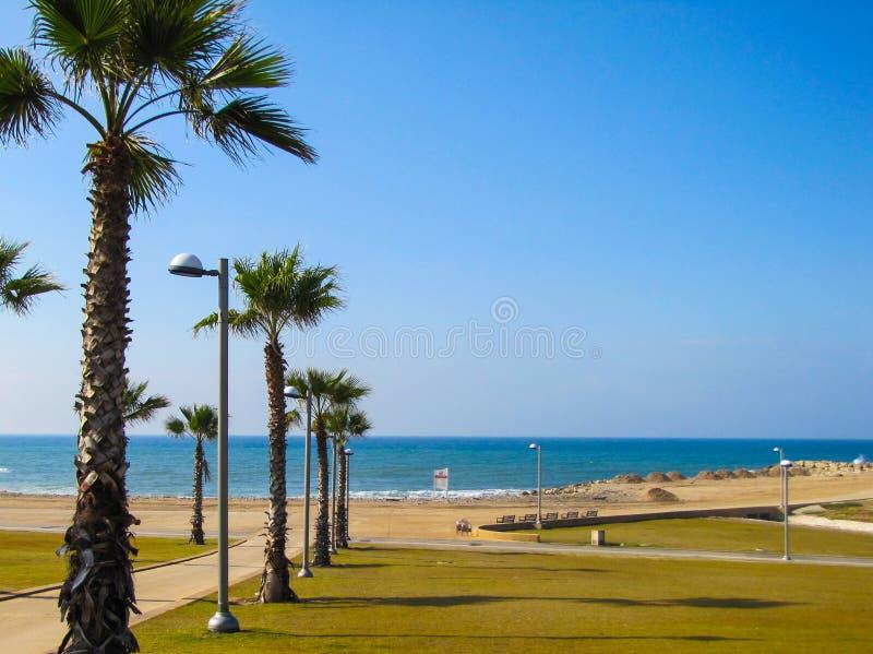 Palmträd och strand royaltyfri fotografi