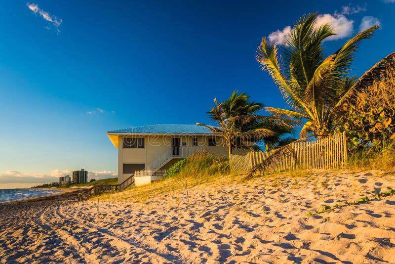 Palmträd och strandhus på Jupiter Island, Florida arkivfoto