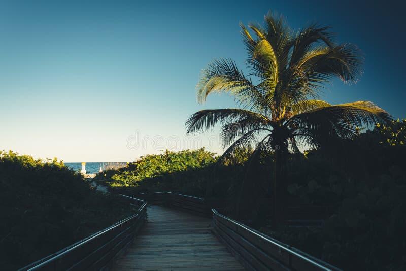 Palmträd och strandpromenadbana till stranden i sångaren Island, Flor arkivbilder